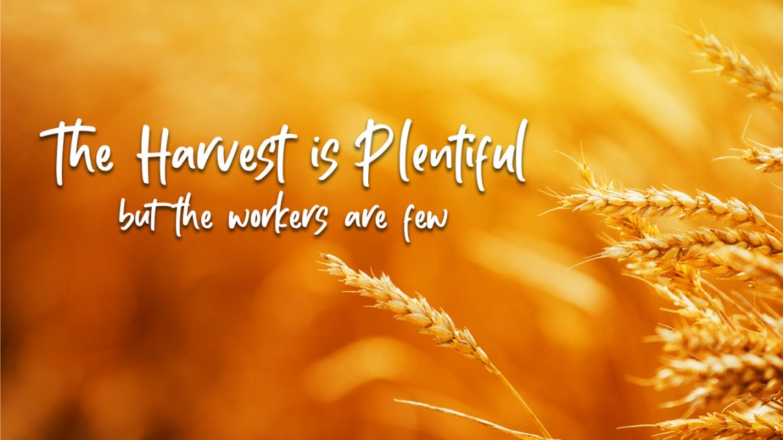 The Harvest is Plentiful but the Workers are Few - Training Authors with CJ  and Shelley Hitz